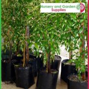 Poly-10-litre-Standard-Plant-bags-NG-1