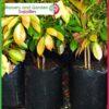 15 litre Poly Planter Bags PB28 at Nursery and Garden Supplies NZ - for more info go to nurseryandgardensupplies.co.nz