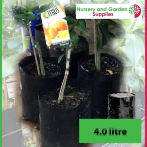 4 litre Poly Planter Bags at Nursery and Garden Supplies NZ - for more info go to nurseryandgardensupplies.co.nz