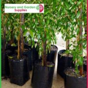 Poly-4-litre-Plant-bags-NG-3