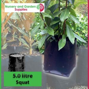 5 litre Squat Poly Planter Bags PB6.5 at Nursery and Garden Supplies NZ - for more info go to nurseryandgardensupplies.co.nz