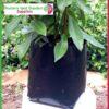 5 litre Squat Poly Planter Bags PB6.5 at Nursery and Garden Supplies NZ - for more info go to nurseryandgardensupplies.co.nz