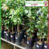 7 litre Tall Poly Planter Bags at Nursery and Garden Supplies NZ - for more info go to nurseryandgardensupplies.co.nz