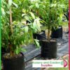 20 litre Squat Poly Planter Bags at Nursery and Garden Supplies NZ - for more info go to nurseryandgardensupplies.co.nz
