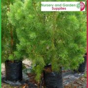 Poly-20-litre-tall-Plant-bags-NG-2