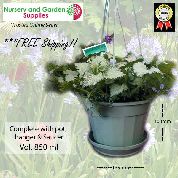 140mm Hanging Basket Pot Hanger Saucer Sage at Nursery and Garden Supplies NZ - for more info go to nurseryandgardensupplies.co.nz