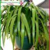 200mm Hanging Basket Green saucerless at Nursery and Garden Supplies NZ - for more info go to nurseryandgardensupplies.co.nz