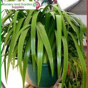 200mm-Saucerless-Hanging-basket-Green-4