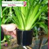 140mm Squat Plant Pot