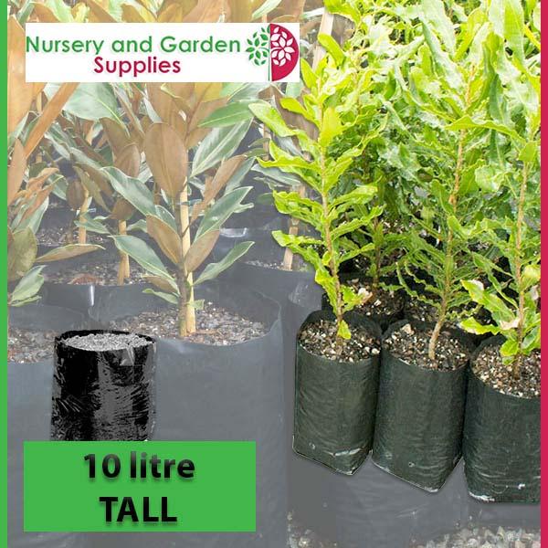 10 litre Tall Poly Planter Bags at Nursery and Garden Supplies NZ - for more info go to nurseryandgardensupplies.co.nz