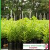 6 litre Tall Poly Planter Bags at Nursery and Garden Supplies NZ - for more info go to nurseryandgardensupplies.co.nz