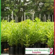 Poly-5-litre-Tall-Plant-bags-NG-4