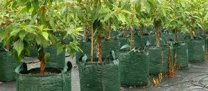 Woven Planter Bags Category - Nursery and Garden Supplies NZ - for more info go to nurseryandgardensupplies.co.nz
