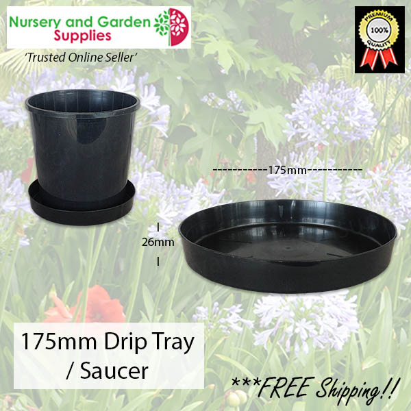 Saucer to suit 175mm - for more info go to nurseryandgardensupplies.co.nz