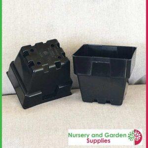 100mm Square Squat Punnet-Pot Black - for more info go to https://nurseryandgardensupplies.co.nz/product/100mm-square-squat-plastic-punnet-pot-black/