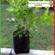 Poly-1-litre-Plant-bags-NG-3