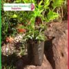 2 litre Poly Planter Bags PB3 at Nursery and Garden Supplies NZ - for more info go to nurseryandgardensupplies.co.nz