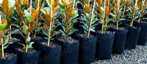 Black Poly Planter Bags Category - Nursery and Garden Supplies NZ - for more info go to nurseryandgardensupplies.co.nz