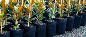 Black Poly Planter Bags Category - Nursery and Garden Supplies NZ - for more info go to nurseryandgardensupplies.co.nz