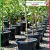 300mm Plant Pot