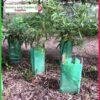 450mm Treeguard