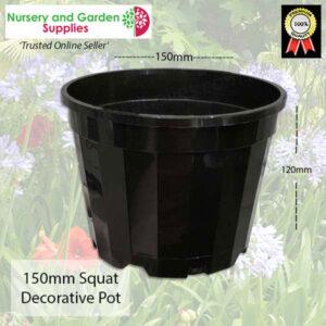 150mm Squat Pot Decorative